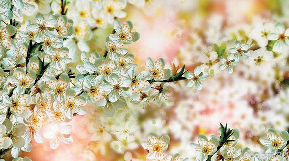 Фото Весеннее цветение яблони