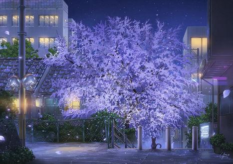 Фото Котенок сидит на улице ночного города с цветущим деревом, by PJYNico