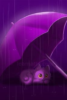 Фото Котенок прячется от дождя под зонтом, by leamatte