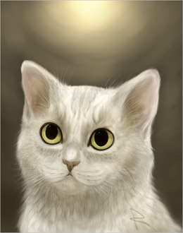 Фото Белая кошка на сером фоне, by mellinae