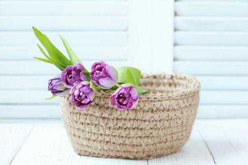 Фото Вязаная корзина с тюльпанами, автор Ольга Попкова