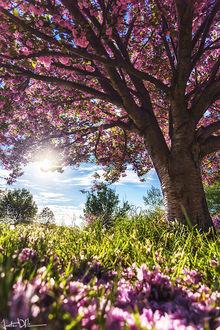 Фото Цветущее дерево в лучах солнца