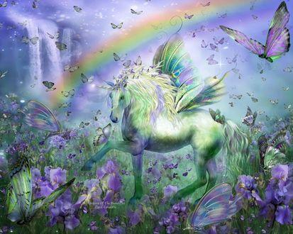 Фото Единорог на поле с ирисами, на фоне неба с радугой. Художник Кэрол Каваларис / Carol Cavalaris
