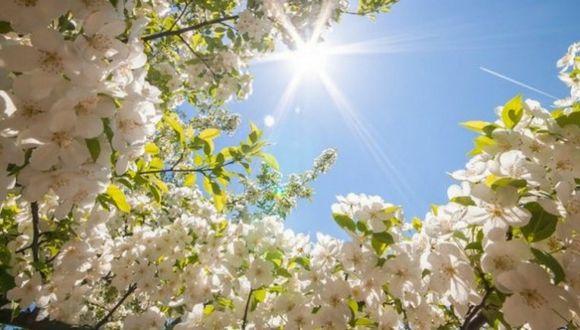 Фото Цветы яблони на фоне неба