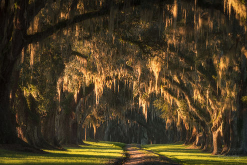 Фото Работа Золотой путь. Солнце, освещая пух на деревьях, образует большое свечение, фотограф Edwin Mooijaart