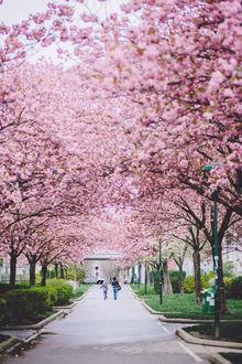 Фото Женщина с ребенком идут по аллее с весенними цветущими деревьями