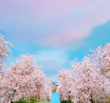 Фото Девушка в шляпке стоит на фоне цветущей сакуры и облачного голубого неба, by Rаi