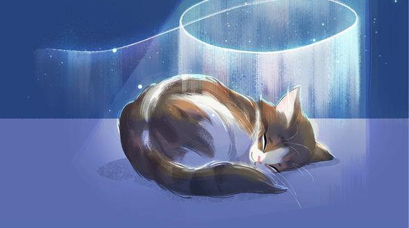 Фото Спящий рисованный котик