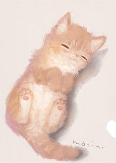 Фото Рыжий котенок, by manino