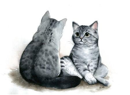 Фото Два серых полосатых котика сидят на против друг друга, by Alliot-art