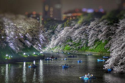 Фото Работа Река Любви, Japan / Япония. Фотограф Sameh Refat