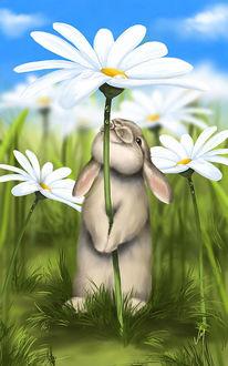Фото Кролик с ромашкой. Художница Veronica Minozzi