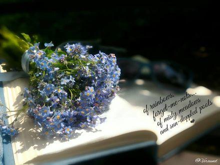 Фото Незабудки на открытой книге, by veraund