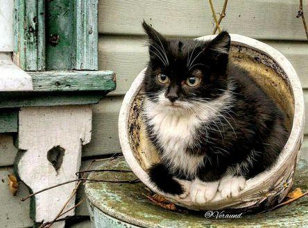 Фото Кот сидит в цветочном горшке, by veraund