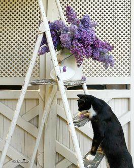 Фото Кошка на лестнице, где стоит сирень в бидоне