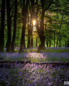 Фото Лучи солнце пробиваются сквозь деревья и освещают цветочные поляны, by ilyasayub1