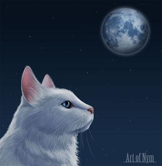 Фото Белоснежный и голубоглазый кот в профиль на фоне ночного неба и полной луны, by ArtofNym