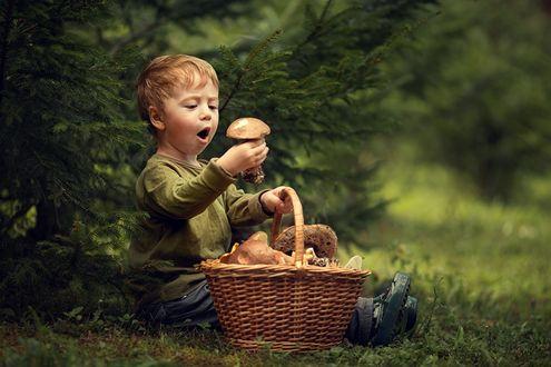 Фото Мальчуган, сидя у полной корзинки грибов, с восторгом рассматривает красивый боровик, заново переживая радость находки