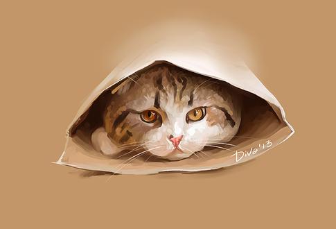 Фото Кот с янтарными глазами в пакете, by CurlyJul