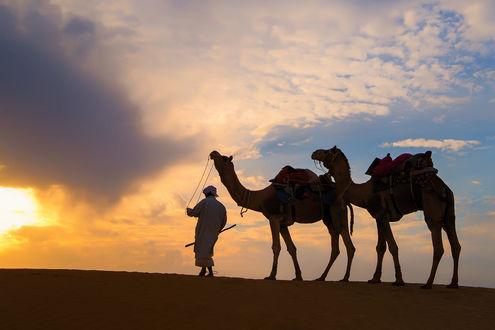 Фото Погонщик с верблюдами на фоне облачного неба, фотограф Smoothy