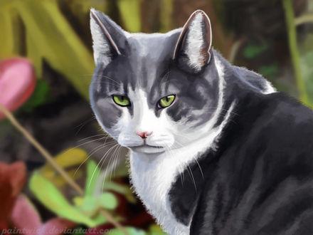 Фото Зеленоглазый кот на размытом фоне, by Paintwick
