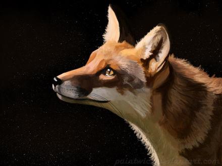 Фото Лисица в профиль на фоне ночного звездного неба, by Paintwick