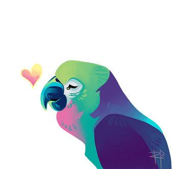 Фото Цветной попугайчик рядом с сердцем на белом фоне, by rispaizy