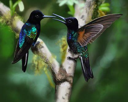 Фото Две колибри на фоне веточки дерева, by Gamma-Wings