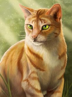 Фото Зеленоглазый полосатый кот, by Golphee