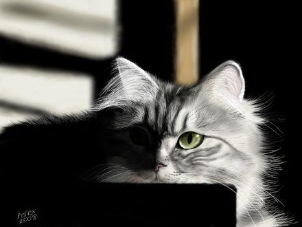 Фото Зеленоглазая серая кошечка, by pctrx