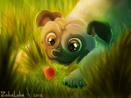 Фото Собака смотрит на мячик, лежащий в траве, by Zoba22