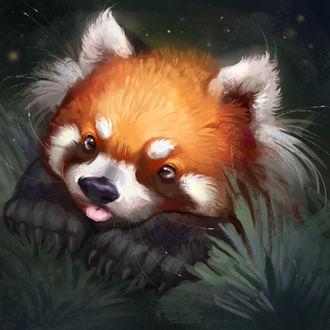 Фото Красная панда, by TehChan