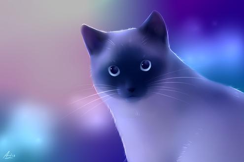 Фото Сиамская кошка на размытом фоне, by LuminousDazzle