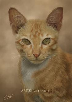Фото Зеленоглазый белой-рыжий кот, by josephinekazuki