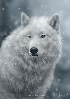 Фото Белоснежный волк под снегопадом, by josephinekazuki