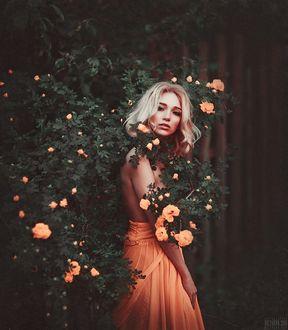 Фото Девушка стоит у цветущего куста роз. Фотограф Светлана Беляева
