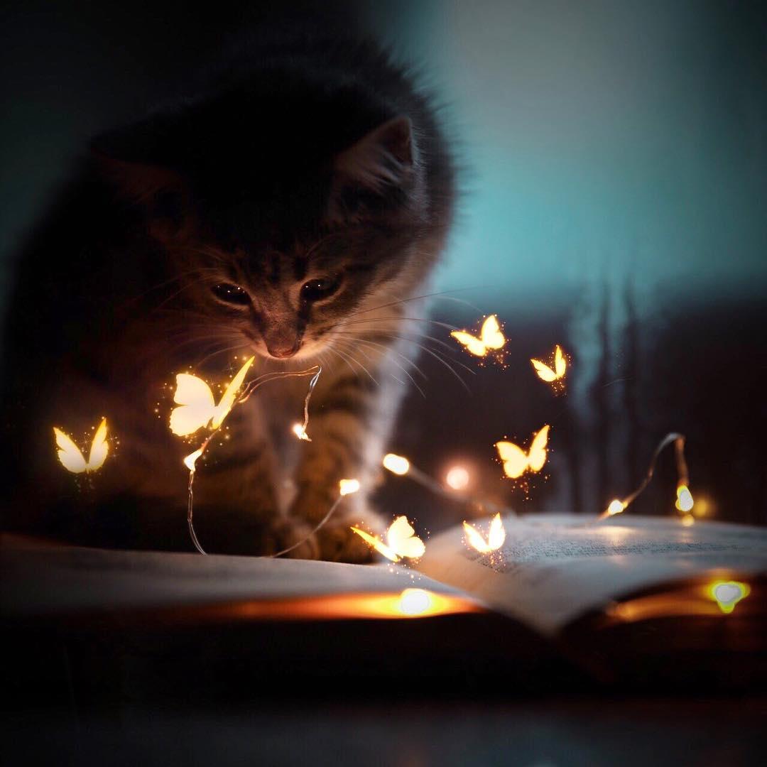 Фото Кошка смотрит на светящихся бабочек, by a. b. photoart