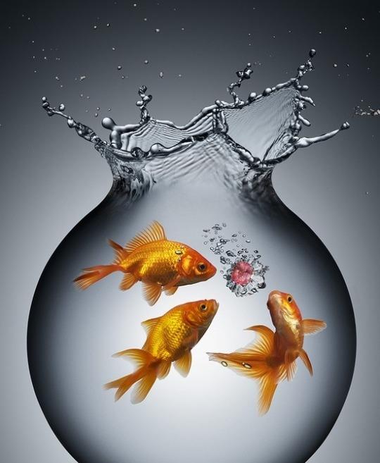 красивые картинки с рыбками золотыми рыбками гастролях
