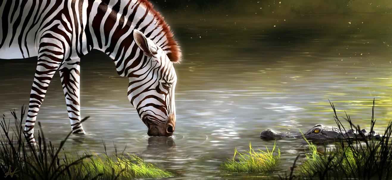 Фото Пьющая воду зебра, рядом крокодил смотрящий на нее, by Atropicus
