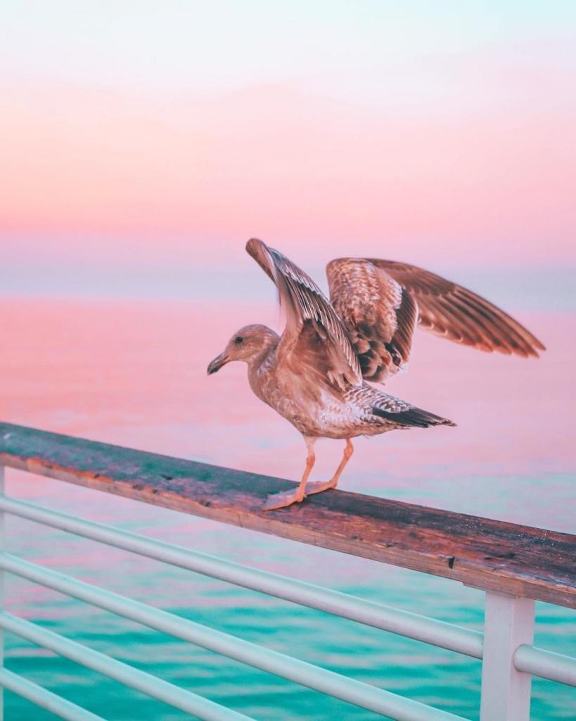 Фото Чайка на фоне моря