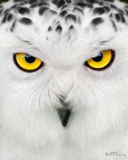 Фото Мордочка совы крупным планом, by KomodoEmpire