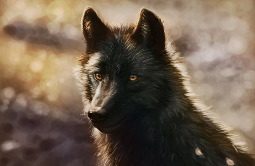 Фото Черный волк на размытом фоне, by ArtofNyra