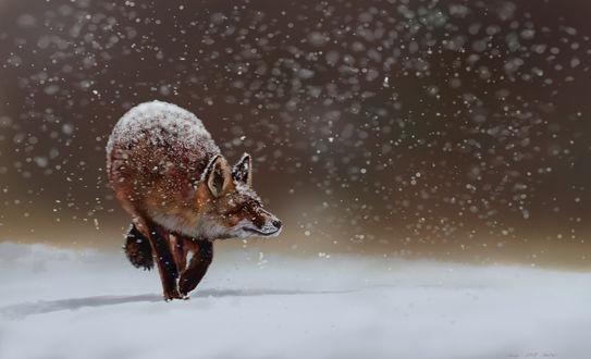 Фото Идущий по снегу лис под снегопадом, by nosoart