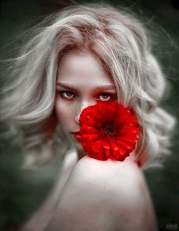 Фото Девушка с красной герберой, фотограф Светлана Беляева