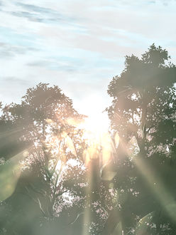 Фото Солнечные лучи проникают сквозь листву деревьев, by saya