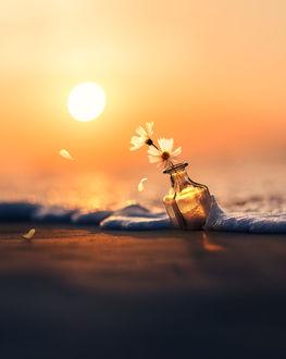 Фото Ромашки в пузырьке в пенистой морской воде, by Ashraful Arefin