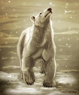 Фото Белый полярный медведь под снегопадом, by Atropicus