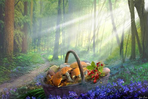 Фото Корзина с грибами и земляникой освещена солнечными лучами. Фотограф Igor Zenin