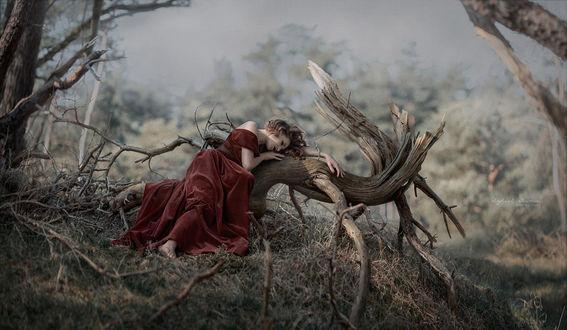 Фото Девушка в бордовом платье лежит на коряге. Фотограф Ирина Джуль