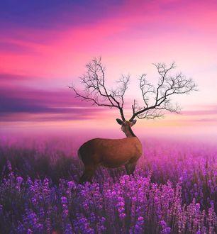 Фото Олень с рогами как ветви дерева стоит на цветущем поле